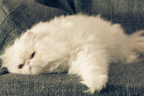 Kitten「Cat on armchair」:スマホ壁紙(14)