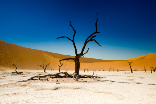 Namibia「Dead Tree in Desert and Salt Flat」:スマホ壁紙(1)