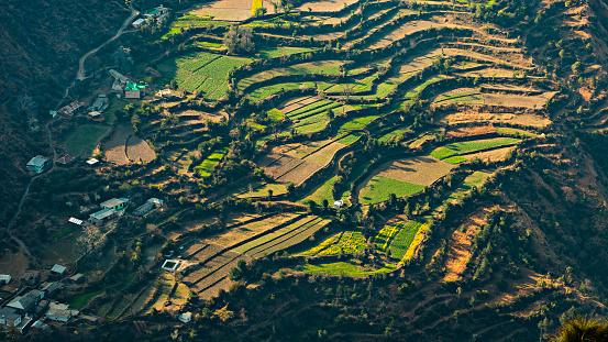 Himachal Pradesh「Beautiful landscape view of terraces farms in hills.」:スマホ壁紙(1)