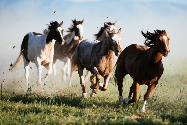 Beautiful landscape in Wild West in USA - Wild horses galloping:スマホ壁紙(壁紙.com)