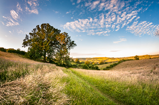 Pasture「Beautiful Landscape In The Cotswolds, England」:スマホ壁紙(4)