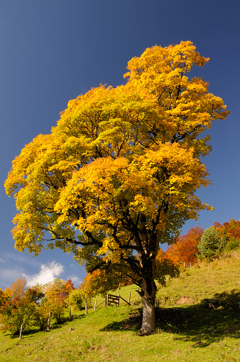 Steep「Beautiful lone mountain tree alpine vibrant autumn colours」:スマホ壁紙(12)