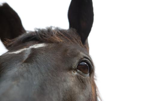 Eyesight「Horse」:スマホ壁紙(19)