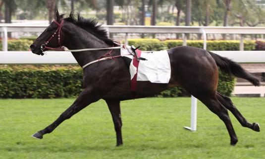 Horse「Horse」:スマホ壁紙(2)