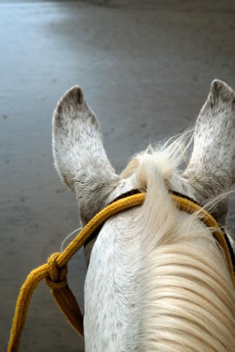 Animal Mane「Horse」:スマホ壁紙(18)