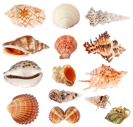 snails「Seashells set isolated on white background」:スマホ壁紙(2)