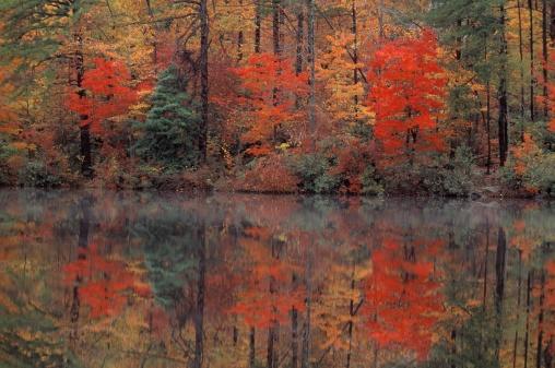かえでの葉「Hanging Rock State Park, North Carolina, USA」:スマホ壁紙(5)