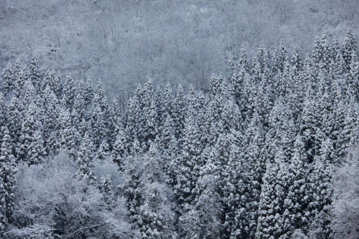 Low Angle View「Snowcapped trees」:スマホ壁紙(18)