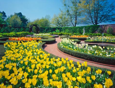 Ornamental Garden「Spring in southern USA」:スマホ壁紙(15)