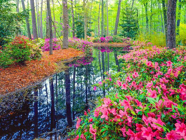 Spring in Southern Woodland Garden:スマホ壁紙(壁紙.com)
