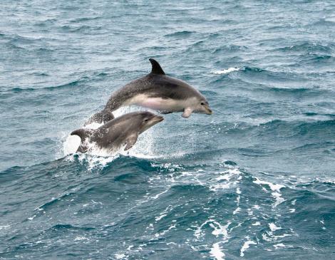 Showing Off「Dolphin Jump」:スマホ壁紙(6)