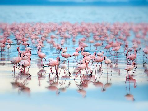 Eating「Flamingoes」:スマホ壁紙(19)