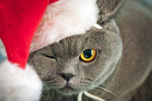 幸福「クリスマスの猫」:スマホ壁紙(16)