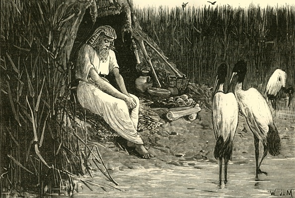 Hiding「Anysis Concealed In The Marshes Of The Delta」:写真・画像(0)[壁紙.com]
