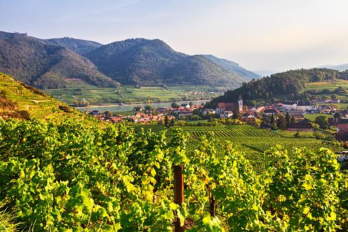 Austria「Autumn view of Vineyards around Spitz, Wachau valley, Austria」:スマホ壁紙(3)
