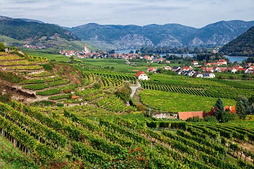 UNESCO「Autumn view of Vineyards around Spitz, Wachau valley, Austria」:スマホ壁紙(19)