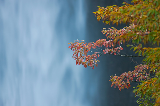 Nikko City「Autumn View of Kegon Falls in Nikko, Japan」:スマホ壁紙(3)