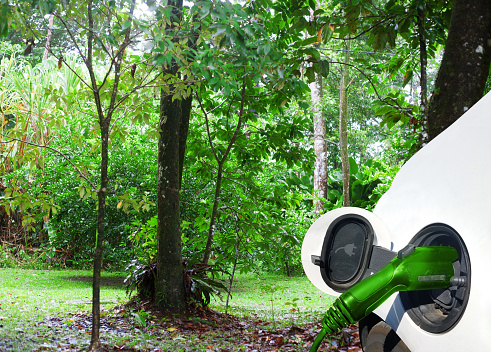 Rainforest「Charging Electric Car」:スマホ壁紙(19)