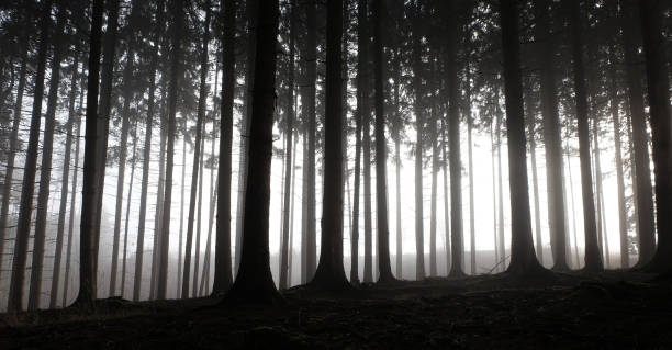 Forest landscape with dramatic silhouettes, miniature effect and selective focus:スマホ壁紙(壁紙.com)