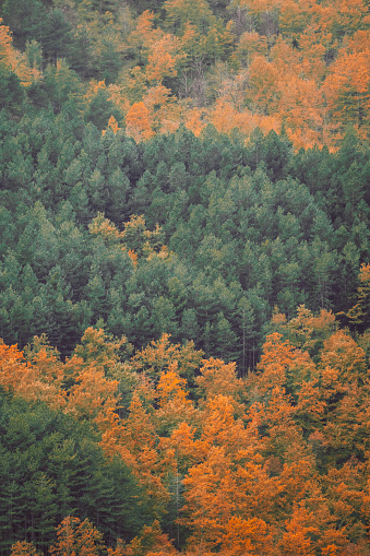 Variegated Foliage「Forest landscape in autumn season」:スマホ壁紙(17)