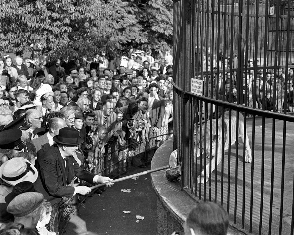 Animal「Churchill At The Zoo」:写真・画像(8)[壁紙.com]