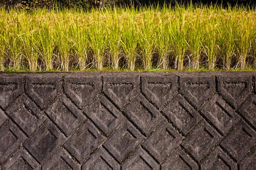 Japan「Side of terraced rice field」:スマホ壁紙(5)