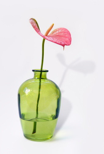 Anthurium「Pink anthurium flower in a green glass vase」:スマホ壁紙(13)