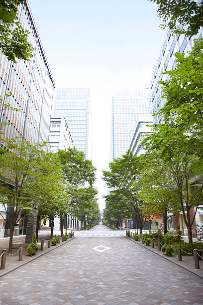 Trees of street lined with office buildings.:スマホ壁紙(壁紙.com)