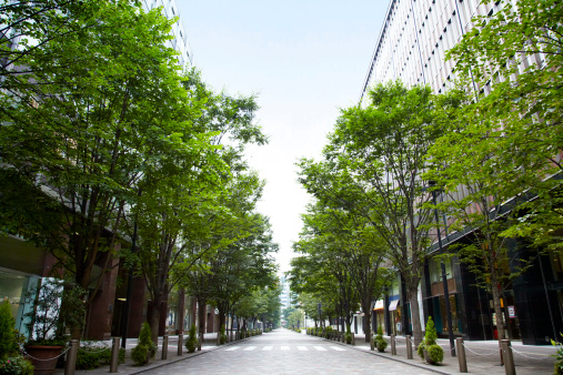 都市「Trees of street lined with office buildings.」:スマホ壁紙(9)