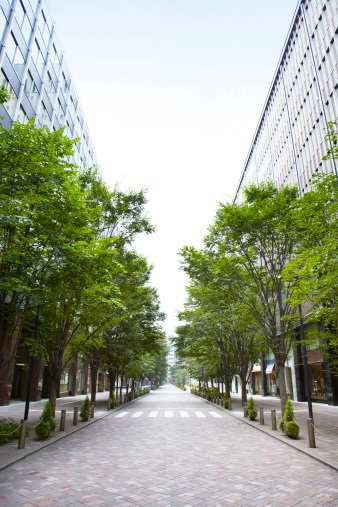 Japan「Trees of street lined with office buildings.」:スマホ壁紙(11)
