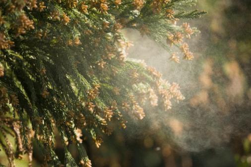 Allergy「Cedar pollen in the air」:スマホ壁紙(12)