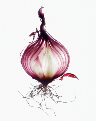 Onion「Red onion, cross-section, close-up」:スマホ壁紙(15)