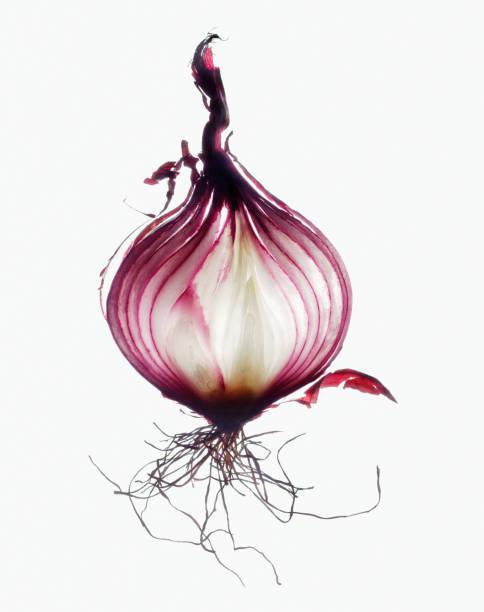 Red onion, cross-section, close-up:スマホ壁紙(壁紙.com)