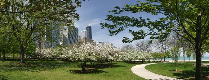 Cherry Blossom「シカゴ公園、ジョンハンコックビル」:スマホ壁紙(12)