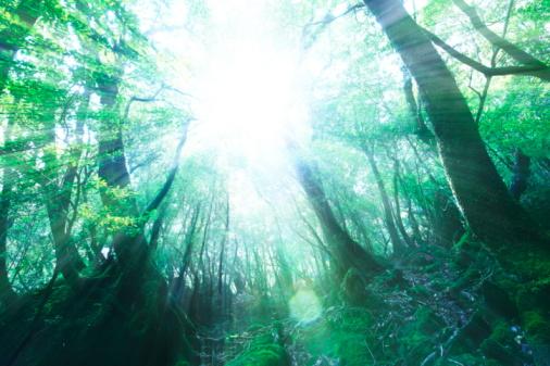 ������「Forest, Yakushima Island, Kagoshima Prefecture, Kyushu, Japan」:スマホ壁紙(19)