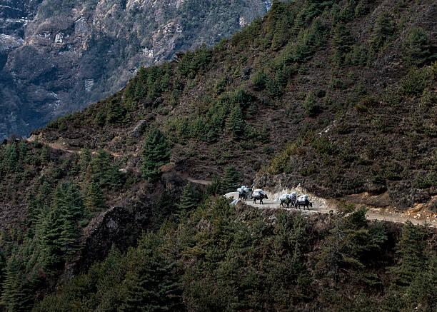 Nepal, Himalaya, Khumbu, pack animals on hiking trail:スマホ壁紙(壁紙.com)