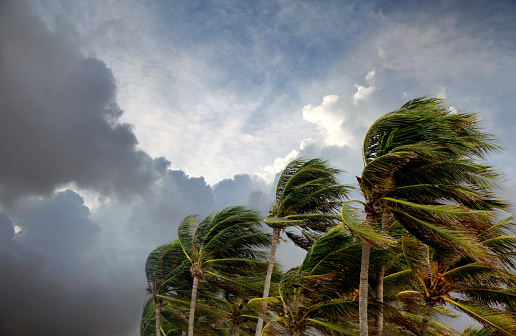 Dramatic Landscape「Windy storm day and waving palm trees」:スマホ壁紙(2)