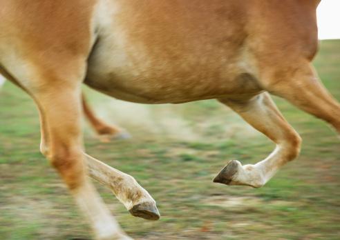 馬「USA, New York State, Hudson, Horse running in field」:スマホ壁紙(11)