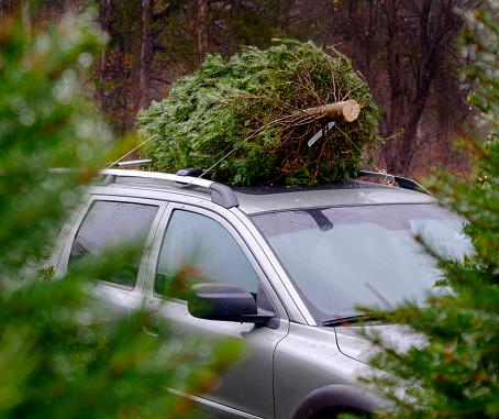 Pinaceae「USA, New York State, Woodstock, Christmas tree on car roof」:スマホ壁紙(17)
