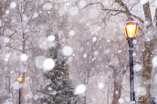 吹雪「USA, New York State, New York City, Madison Square Park in snow」:スマホ壁紙(18)
