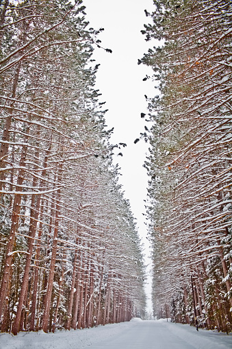 Snowdrift「USA, New York State, View of road in snowy forest」:スマホ壁紙(2)