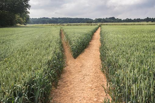 Choice「Diverging paths in field」:スマホ壁紙(1)