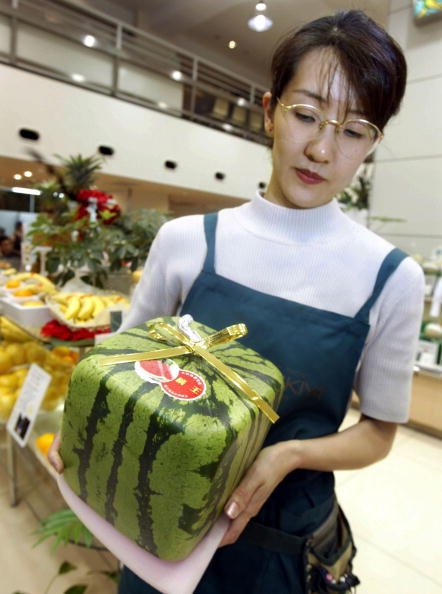 メロン「Square Watermelon in Japan」:写真・画像(2)[壁紙.com]