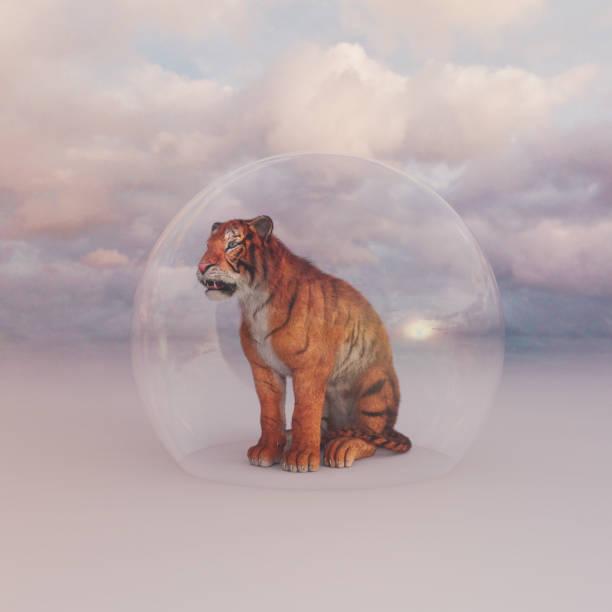 Tiger sitting under protective glass dome alone:スマホ壁紙(壁紙.com)