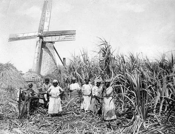 Sugar Cane「Working in the sugar cane fields, Barbados」:写真・画像(2)[壁紙.com]