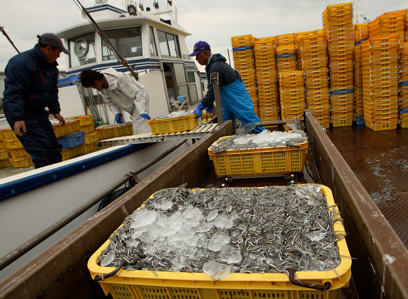 Fisherman「Sand Lance Harvest Begins In Hyogo」:写真・画像(14)[壁紙.com]