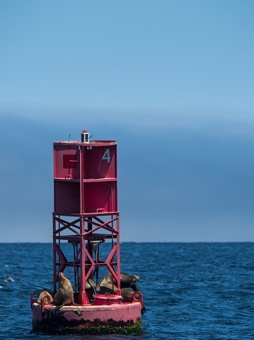 Buoy「Three Seals on an ocean channel marker, San Francisco, California, America, USA」:スマホ壁紙(7)