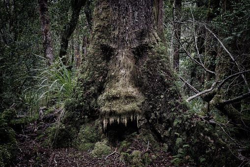 Furious「Face growing in moss on tree in lush forest」:スマホ壁紙(15)