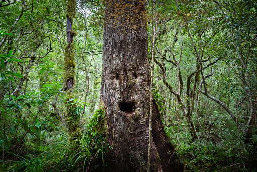 Offbeat「Face growing on tree in lush forest」:スマホ壁紙(15)