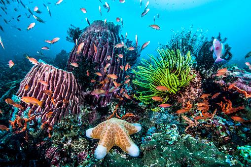 Pacific Ocean「Marine Life」:スマホ壁紙(15)